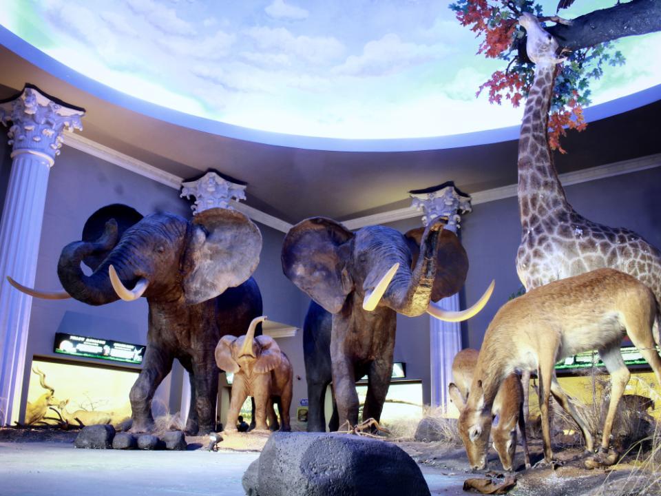 Jatim Park 2 Batu Secret Zoo Museum Satwa Tickets Special Promotion At Traveloka Xperience