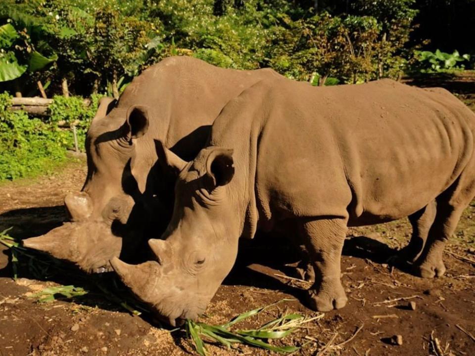 Ada Badak Afrika Di Taman Safari Prigen Apa Sih Uniknya Traveloka Xperience